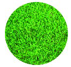 tapis sur l'herbe